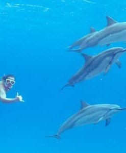 Dolphin Swim & Cultural Cruise - Get on board the catamaran