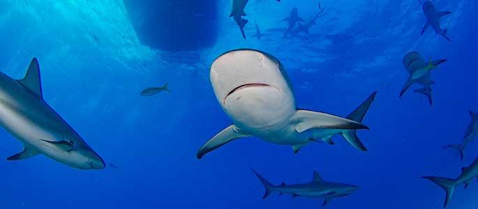 North Shore Shark Cage Encounter