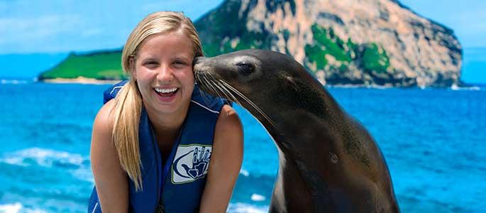 Sea Life Park Sea Lion Swim Adventure