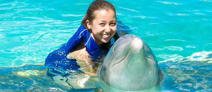 Sea Life Park Dolphin Encounter