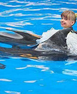 Sea Life Park Dolphin Swim Adventure