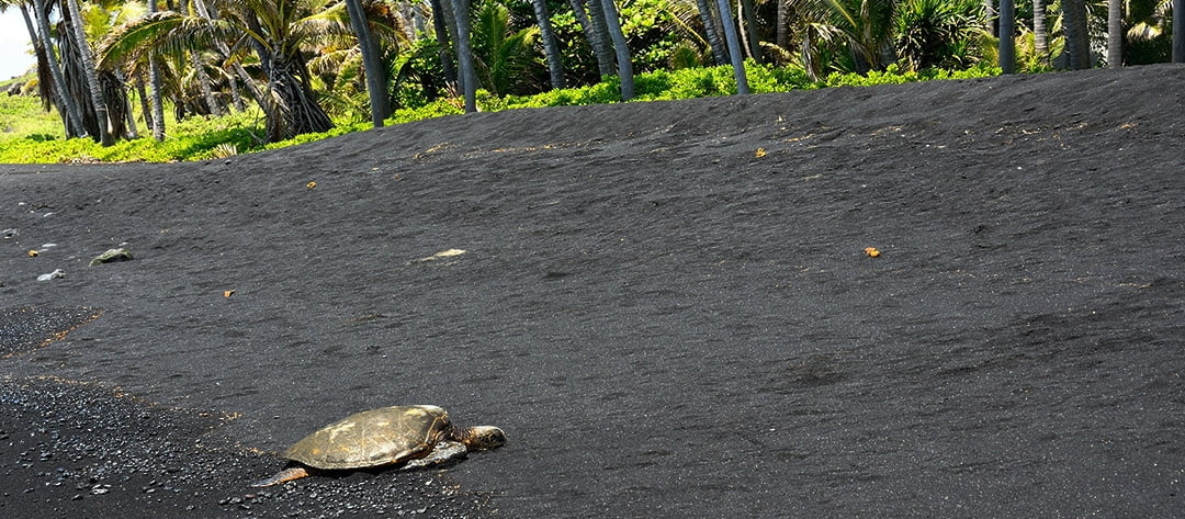 big island helicopter tours reviews with Hawaii Volcano Eco Adventure Helicopter Tour Oahu on Locationphotodirectlink G60630 D108464 I17677840 Wai anapanapa state park Hana maui hawaii furthermore Boss Frogs Hawaiian Reef Fish Tank Top as well Burj Al Arab in addition Local Information as well LocationPhotoDirectLink G255337 D2405445 I135409457 Point Danger Gold Coast Queensland.